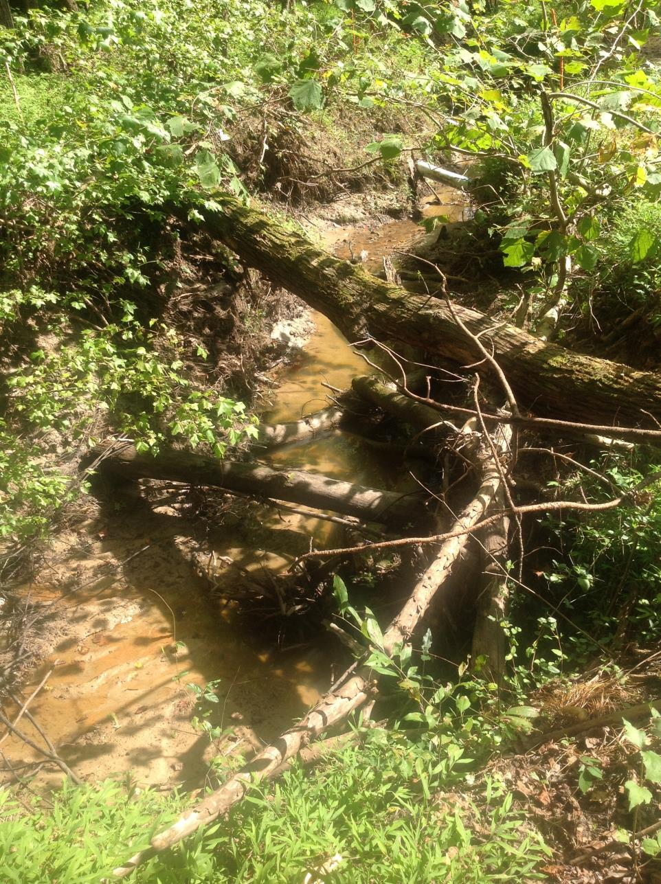 Stream Restoration | Durham County